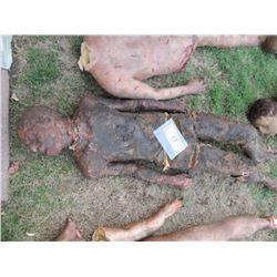 AUTOPSY DEAD BLOODY ROTTEN ZOMBIE BODY 23
