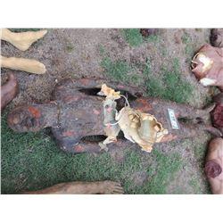 AUTOPSY DEAD BLOODY ROTTEN ZOMBIE BODY 27