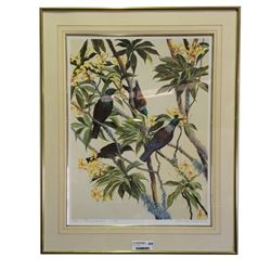 * Merrilyn Jaquiery Ltd Edition Print 'Tuis in Frangipani'