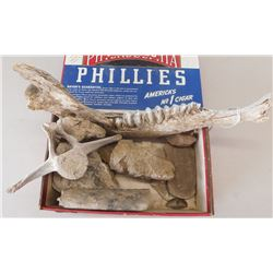 Collection of Fossils & Old Bones