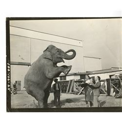 "Disney Studio  Reference Photos for ""Dumbo""  from a 1930's Circus."