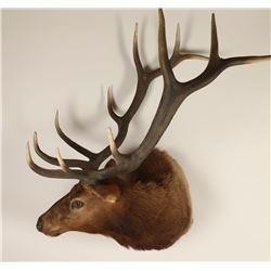 Large Elk Mount