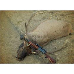 Bull Elk Archery Hunt in Colorado (5 days)