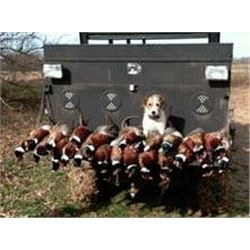 Quail hunt in Yantis, Texas for four hunters (2 day/1 night)