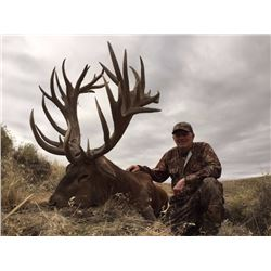 Red Stag hunt in Patagonia, Argentina (5 days/6 nights)