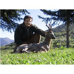 Roe deer hunt in Spain for two hunters, two non-hunters (4 days)