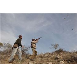 Dove hunt in Argentina for 4 hunters