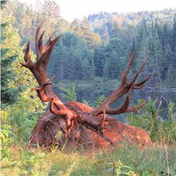 Canadian hunting trip for 2 hunters to take one red stag each (3 days)