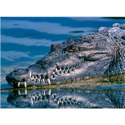 Crocodile Hunt in South Africa for one hunter & one non-hunter (5 days)