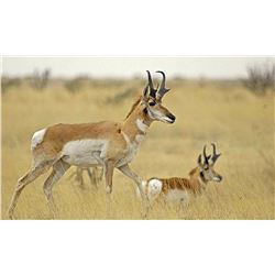 Pronghorn hunt in Valentine, Texas for one hunter and one non-hunter (2 days)