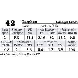 Lot 42 - Targhee