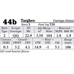 Lot 44b - Targhee