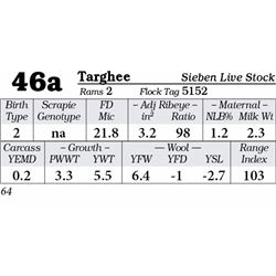 Lot 46a - Targhee