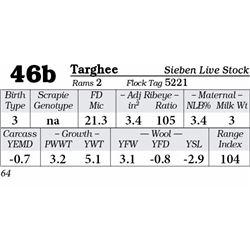 Lot 46b - Targhee