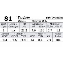 Lot 81 - Targhee