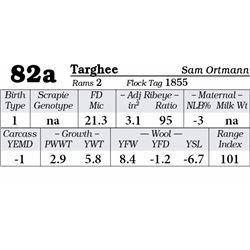 Lot 82a - Targhee