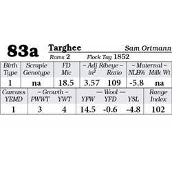 Lot 83a - Targhee