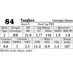 Lot 84 - Targhee