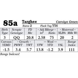Lot 85a - Targhee