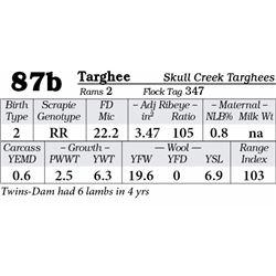 Lot 87b - Targhee