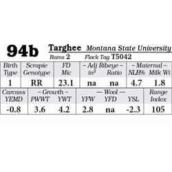 Lot 94b - Targhee