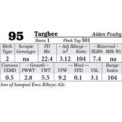 Lot 95 - Targhee