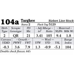 Lot 104a - Targhee