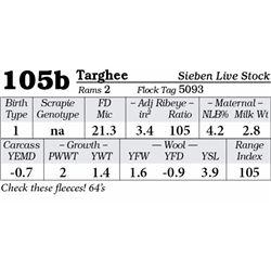 Lot 105b - Targhee