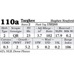 Lot 110a - Targhee
