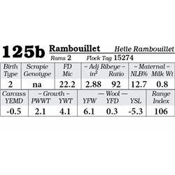 Lot 125b - Rambouillet