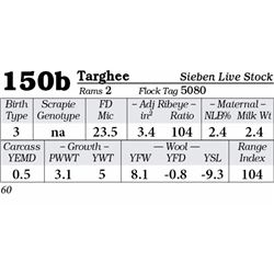 Lot 150b - Targhee