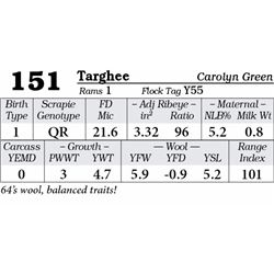Lot 151 - Targhee