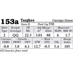 Lot 153a - Targhee