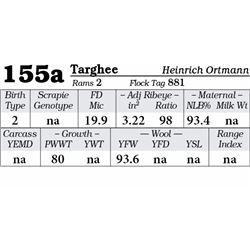 Lot 155a - Targhee