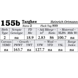 Lot 155b - Targhee