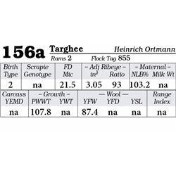 Lot 156a - Targhee