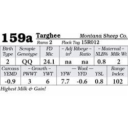 Lot 159a - Targhee