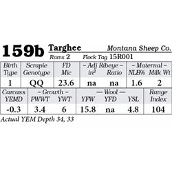 Lot 159b - Targhee