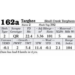 Lot 162a - Targhee