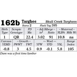 Lot 162b - Targhee