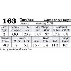 Lot 163 - Targhee