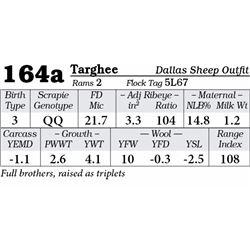 Lot 164a - Targhee
