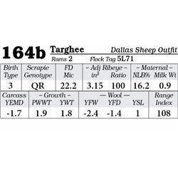 Lot 164b - Targhee