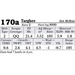 Lot 170a - Targhee