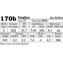 Lot 170b - Targhee