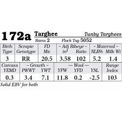 Lot 172a - Targhee