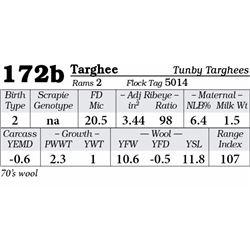 Lot 172b - Targhee