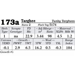 Lot 173a - Targhee