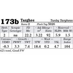 Lot 173b - Targhee
