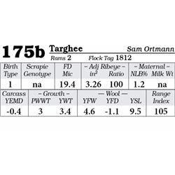 Lot 175b - Targhee
